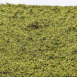 clasificación de aceites de oliva recién extraídos