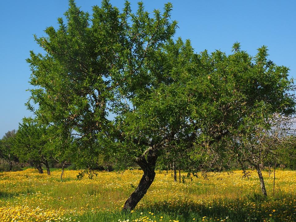 conservación del aceite en verano