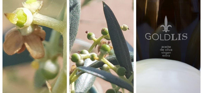 GOLDLIS floración y cuajado